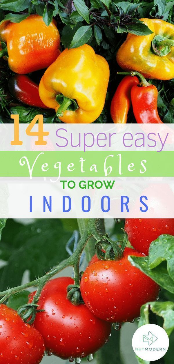 14 Easiest Vegetables to Grow Indoors That'll Feed the Fam