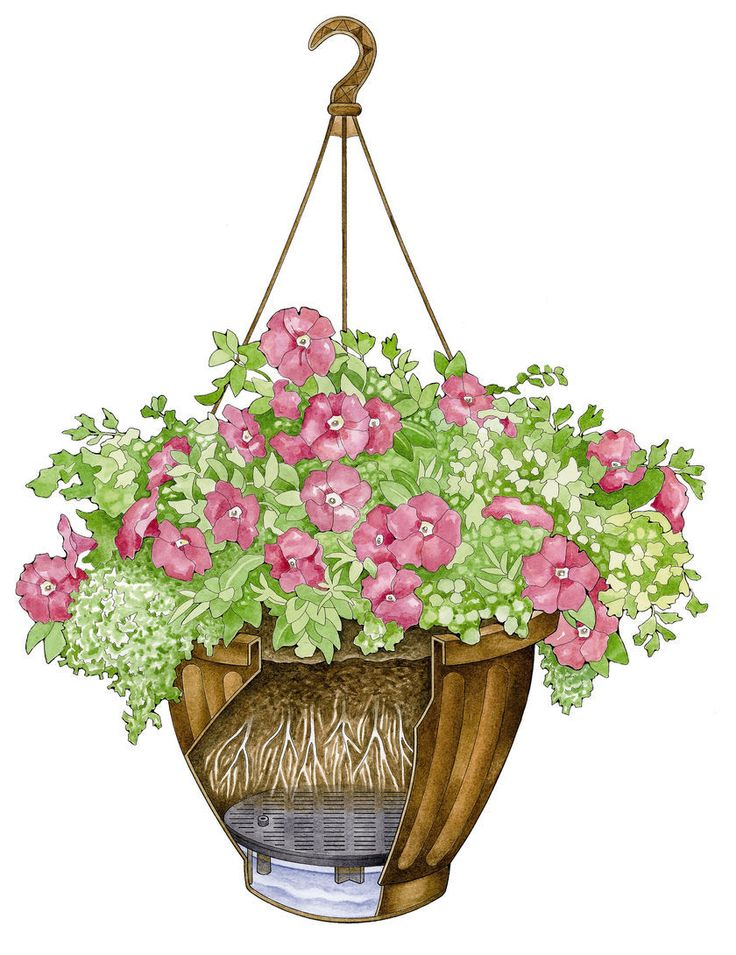 Best Flower Combinations For Hanging Baskets : Best images about window boxes and hanging planters on