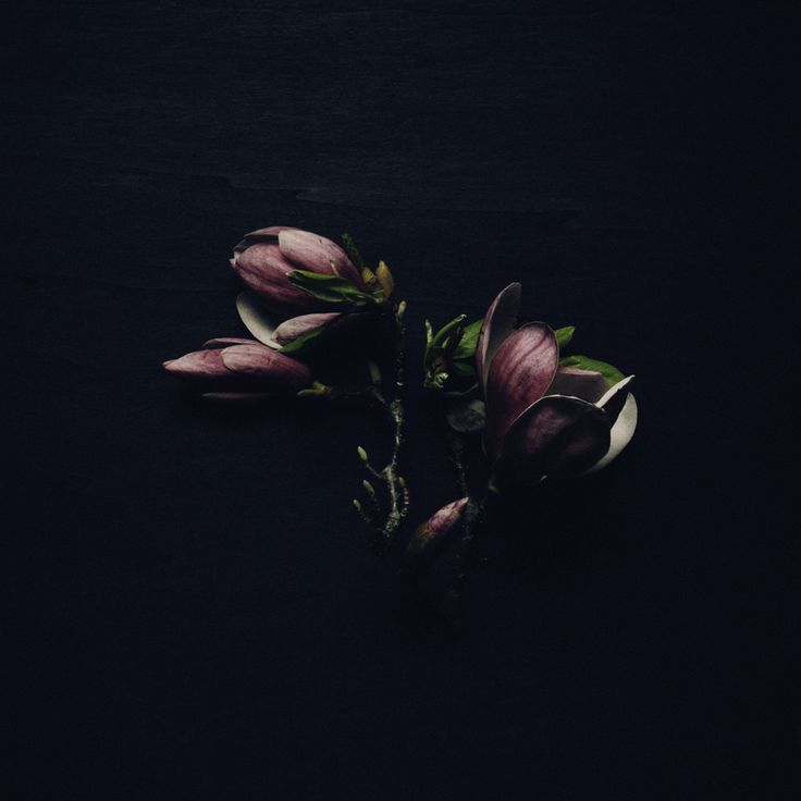 magnolia  photography by Rakai Karaitiana @ aroha and friends