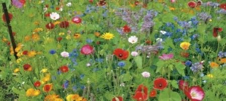Pluk je eigen boeket. Mocht je zelf niet gezegend zijn met een grote tuin vol wilde bloemen en de bloemist is je te duur af, dan kun je ook je bloemen zelf gaan plukken bij een pluktuin.