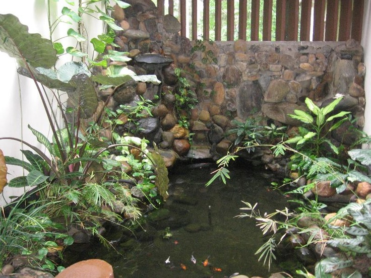 8 best images about indoor ponds on pinterest pond for Indoor gardening minneapolis