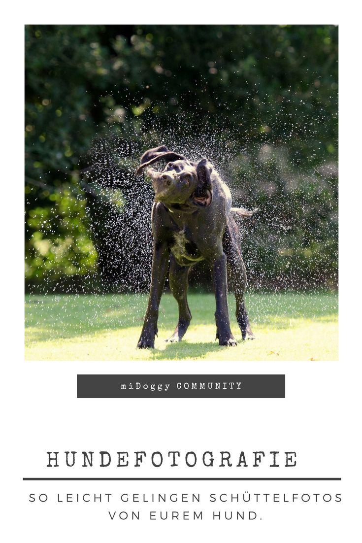 || #Hund || Ideen || #Hunde || Tipps || Tricks || Ideen || Liebe || Welpen || Bilder || #Fotografie