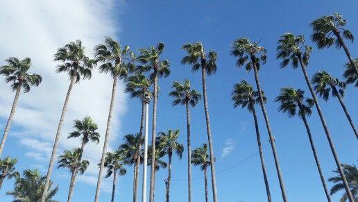 Palm city mersin