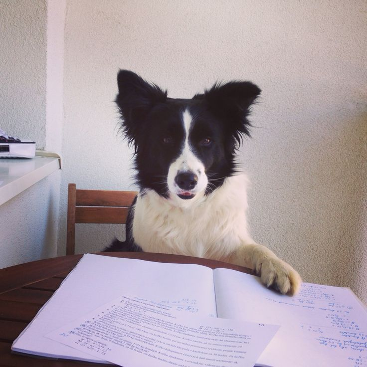 Stop doing homework and come play with me!