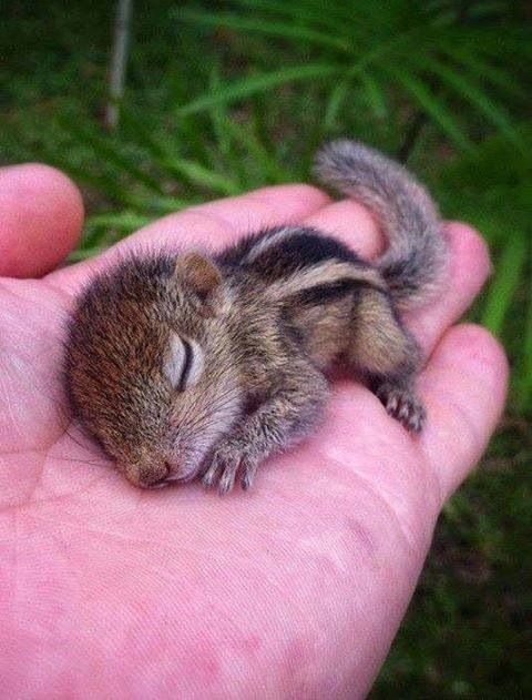Bébé écureuil