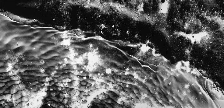 Photogram: Michael Flomen --Littoral Zone