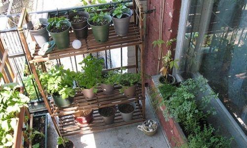 Yeni başlayanlar için balkon bahçeciliği