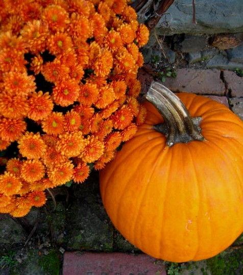 Pumpkin & Mum