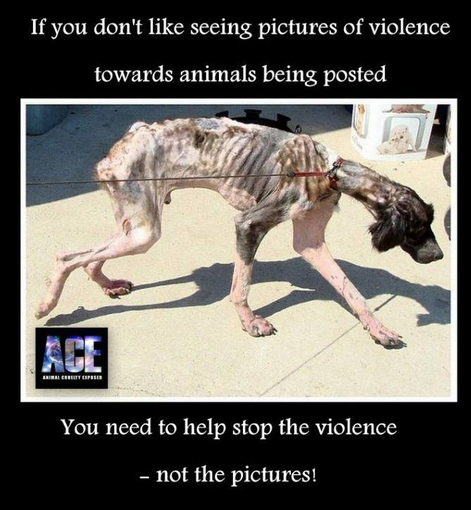 Is writing a dissertation on animal cruelty leading to violent crime a good idea?