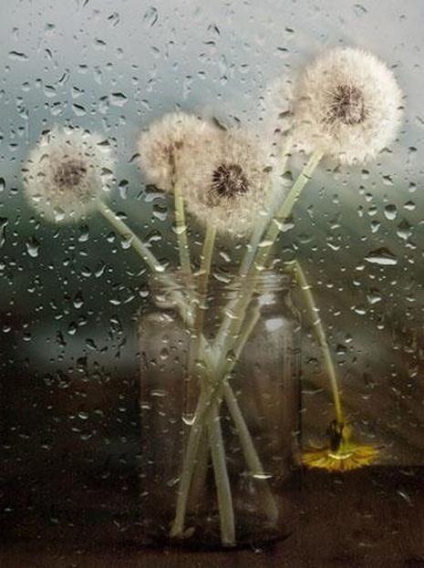Rainy Day Wish