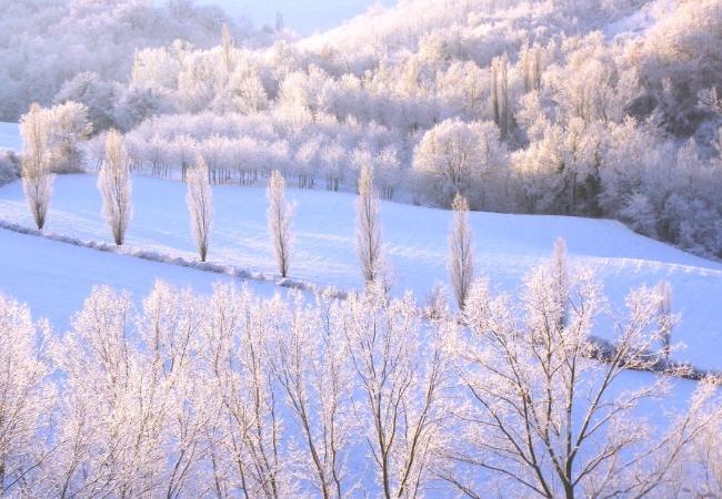 Pictures Tenuta Gorgiano | Poplars winter