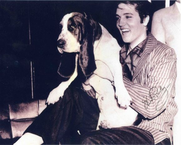 """Elvis Presley's """"Hound Dog"""""""