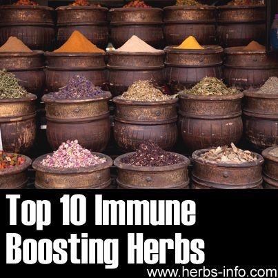 ❤Aside from keeping common colds and flu away, the immune system is your body's first and best defense against potentially lethal diseases like H1N1 and even cancer. If the immune system weakens and malfunctions, imagine the host of diseases that can invade your system. Here are ten herbs which may be helpful in supporting your immune system.❤