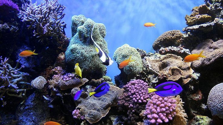 r Imminently Threatened Coral Reefs & How You Can Help | The ...800 x 450 | 124.2 KB | blog.izilwane.org