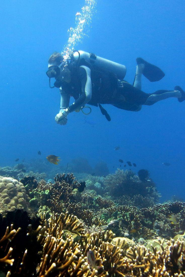 The 25 best scuba diving bali ideas on pinterest goal indonesia scuba diving coral reef coral wonderland scuba diving snorkeling in menjangan island xflitez Choice Image