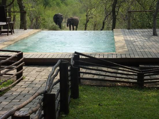 Toro Yaka Bush Lodge: Elefanten am Pool !