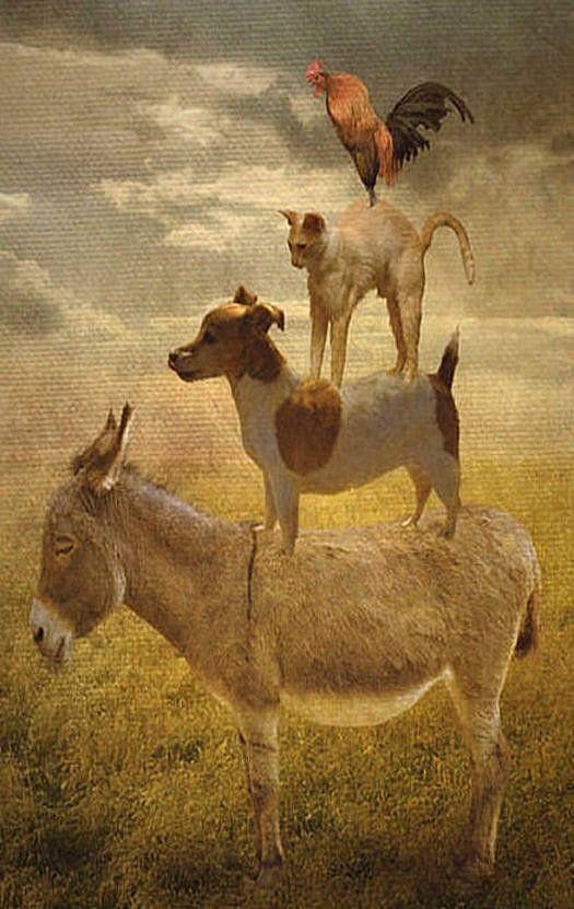 Donkey, Dog, Cat & Rooster | Donkey | Pinterest | Donkey ...