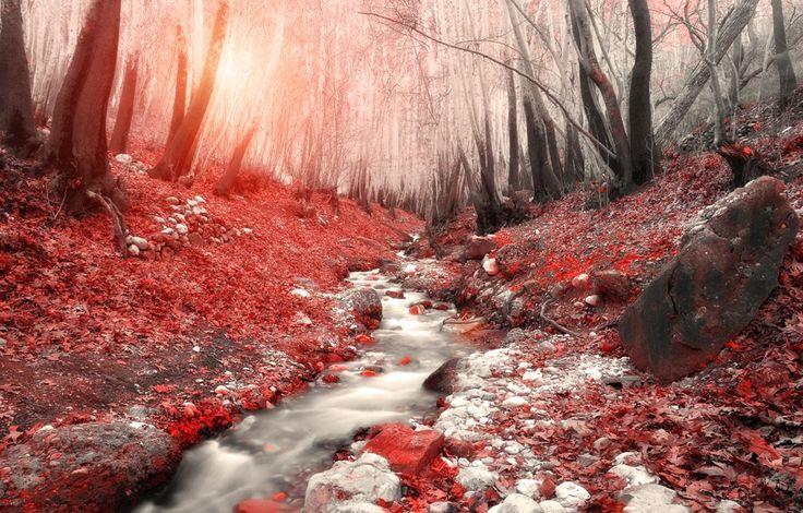 Hossein Zare - River of Life