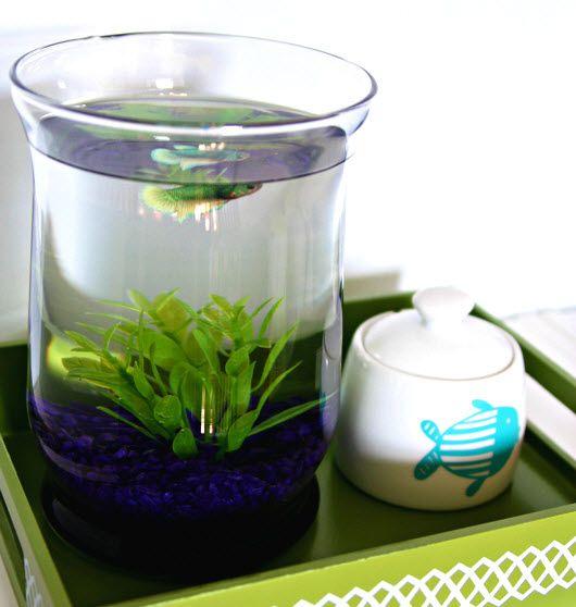 17 best images about aquarium on pinterest sugar bowls for Best fish for bowl