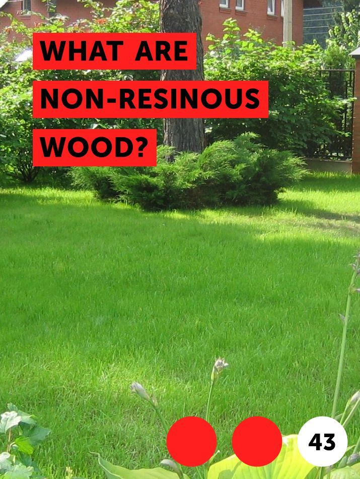 What Are Non Resinous Wood Trees Trees To Plant Magnolia Trees