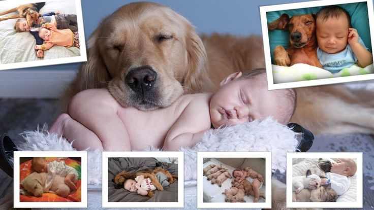 AWWW So Cute...Baby Sleep With Puppy