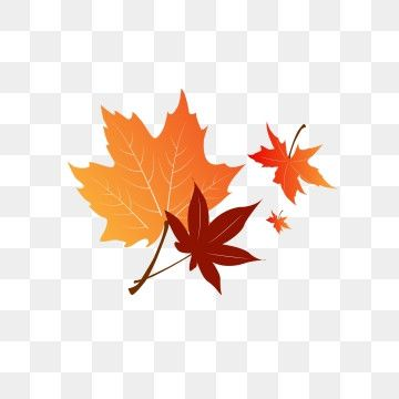 Autumn Red Maple Leaf Floating Falling Material Maple Leaf Clipart Hand Painted Red Maple Png Transparent Clipart Image And Psd File For Free Download In 2021 Maple Leaf Drawing Leaf Drawing