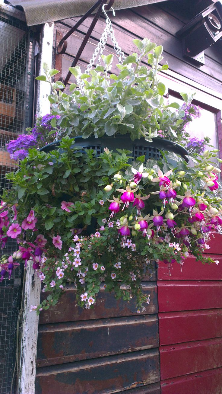Hanging Flower Baskets Seattle : Best images about hanging baskets on