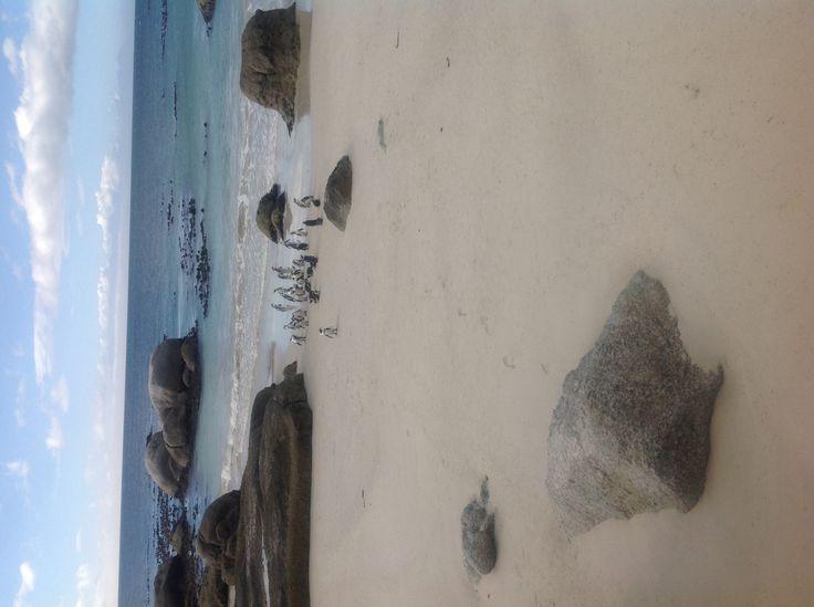 Boulders penguins...home