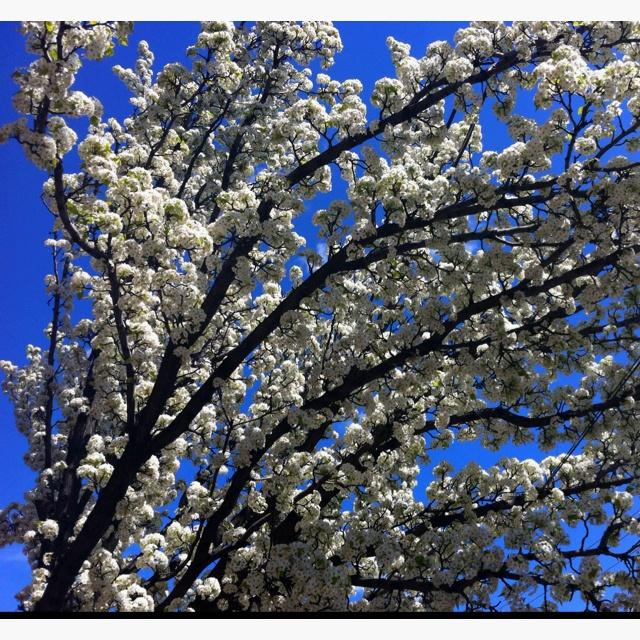 Sunny, Blue Sky Tree