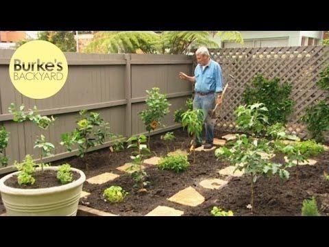 Burke's Backyard, Dwarf Fruit Tree Makeover - YouTube