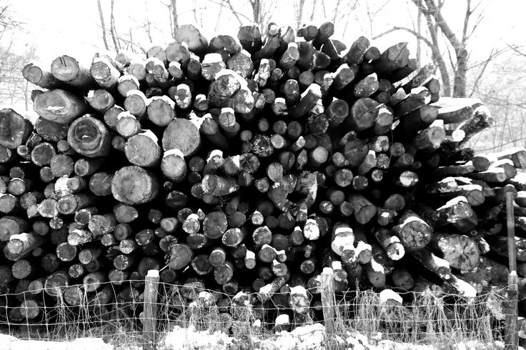 valle di Muggio, catasta di legna