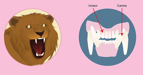 Teeth And Science On Pinterest