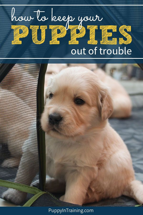 How To Keep Your Puppies Out Of Trouble With The Carlson Portable Pet Pen Whelping Puppies Training Your Puppy Puppy Training