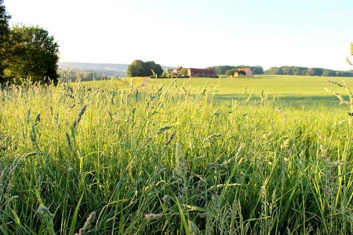 Welkom - Bij Hoeve Hommerich in Gulpen, Zuid Limburg, Heuvelland