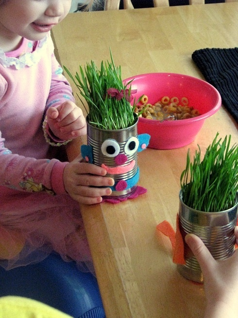 Sprouted Wheat and Grass Heads