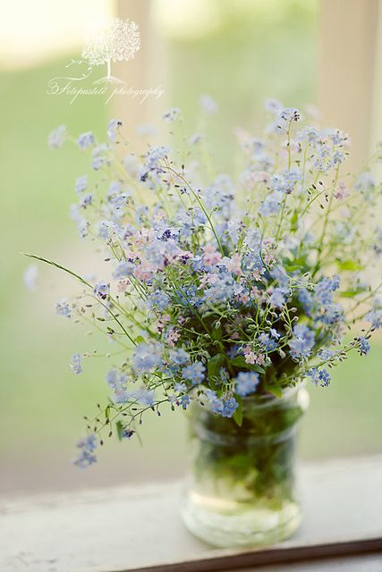 Forget-me-nots by Loreta. She has such amazing images!