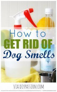DIY Dog Hacks - Get Rid Of Dog Smells - Training Tips, Ideas for Dog Beds and Toys, Homemade Remedies for Fleas and Scratching - Do It Yourself Dog Treat Recips, Food and Gear for Your Pet http://diyjoy.com/diy-dog-hacks