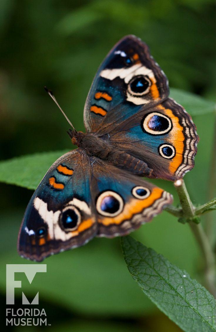Sehen Sie sich unseren #butterfly ID-Guide an, während Sie unsere Butterfly Rainforest-Ausstellung besuchen …