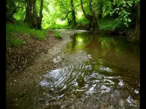 orman su sesleri