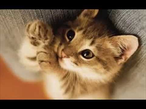 Little Cute Kittens Beautiful - Cats : Video Compilation NEW YOUTUBE CHANNEL: http://www.youtube.com/user/TheFederic777?sub_confirmation=1 FACEBOOK: https://www.facebook.com/KittensLoveForever/ GOOGLE +: https://plus.google.com/u/0/115624639852623703105/posts BLOG: http://look-how-cute-kittens-2.blogspot.com/ BLOG: http://make-dogs-be-happy.blogspot.com/ #KittensCatsMeowing #KittensCatVideo #KittensCatsFunny #KittensCatCompilation