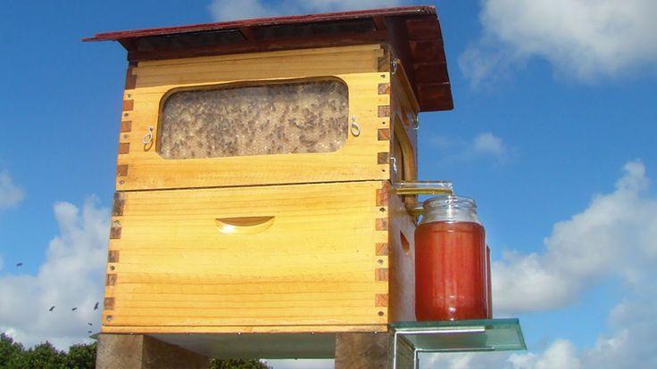 Seit Jahrzehnten tüfteln Stuart und Cedar Anderson an einem Bienenstock, der den von den Bewohnern produzierten Honig schlicht herauslaufen lässt. Jetzt ist dieser fertig und trägt den Namen Flow Hive. So haben die Bienen ihre Ruhe und es braucht auch keinen Imker mehr