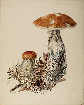 This is an image of Beatrix Potters watercolour titled