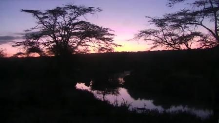 Located near the Mpala Research Centre in Kenya, this live Safari camera pans across a river where you may see elephants, lions, monkeys and other animals.