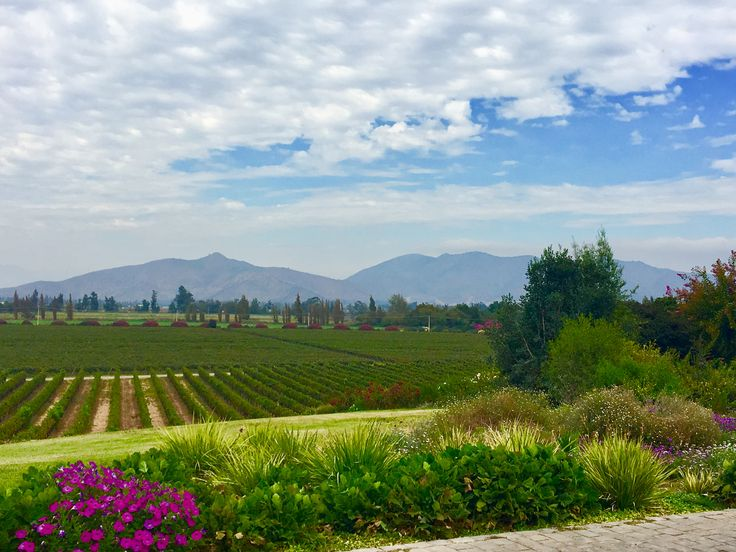 Valle del Maipo, Chile. Beautiful Odfjell vineyard, with stunning views and fruitful bold wines