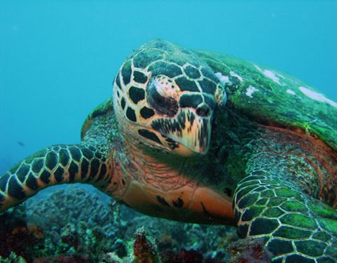 Go diving off of Gili islands - see the turtles!