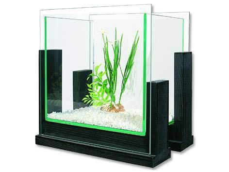 betta akvárium - Google keresés