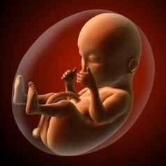Gravidanza: tutte le proprietà del cordone ombelicale Il cordone ombelicale è l'organo che mette in comunicazione la mamma e il feto durante tutta la grav cordone ombelicale cellule staminali