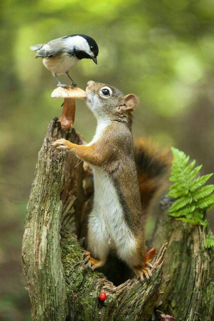 And so, the duel for the last nut began...