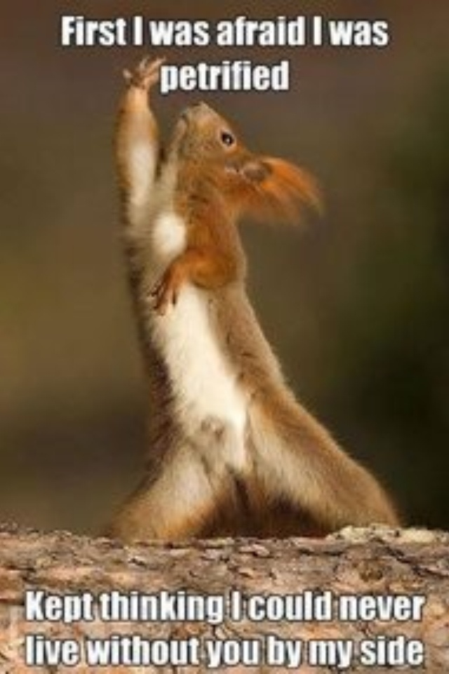 Funny Dancer Meme : Dancing squirrel my style pinterest