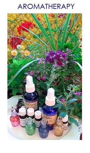 Ravensara - Organic Essential Oils
